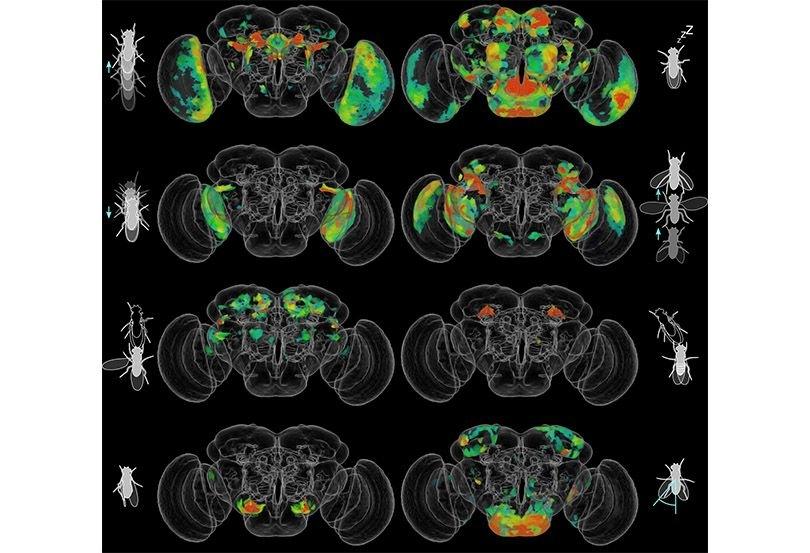 نقشه برداری از نورونهای مغز مگس به کمک هوش مصنوعی